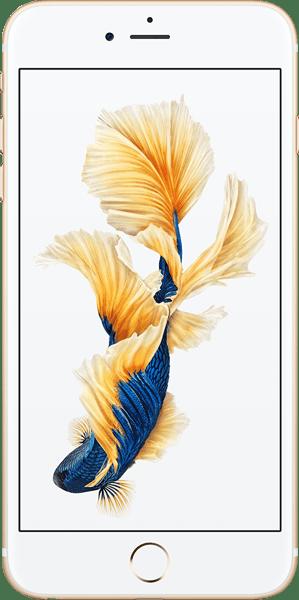 iPhone 6S Plus ve iPhone 7 Plus