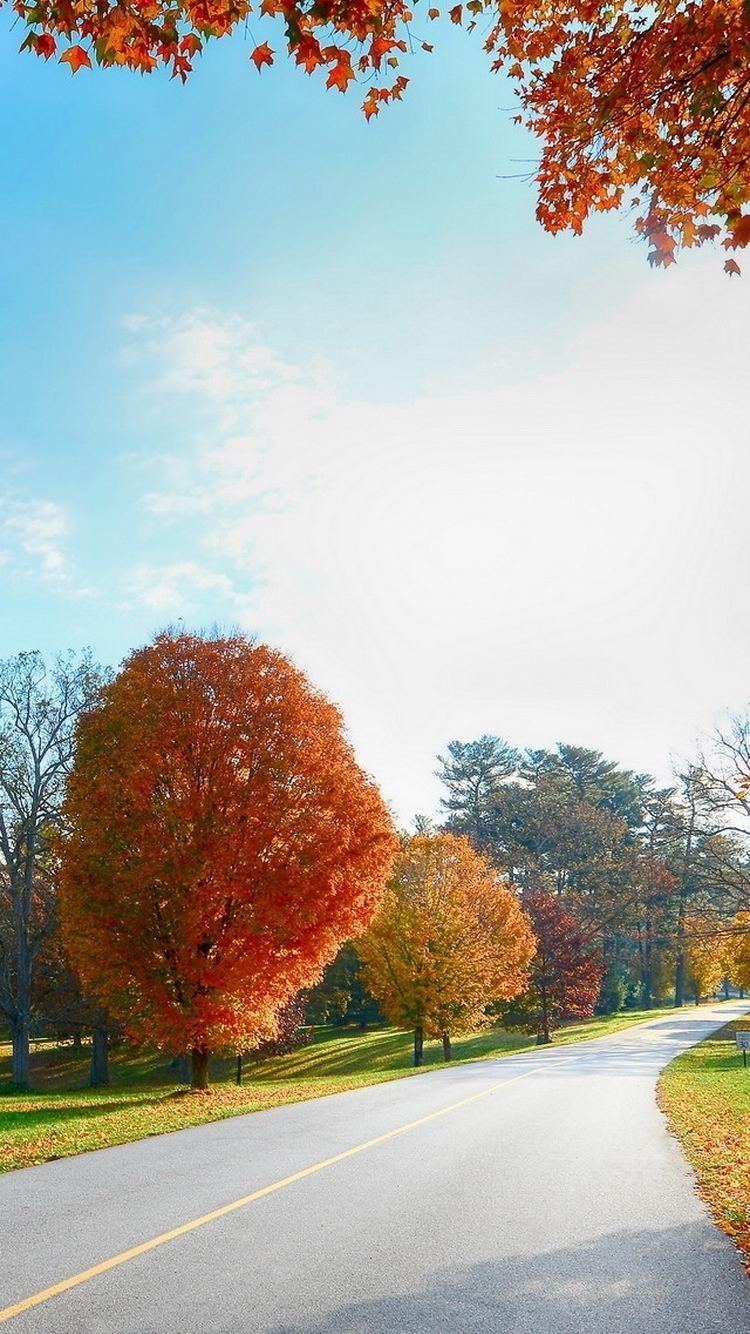 Autumn Road Landscape iPhone 6 Wallpaper