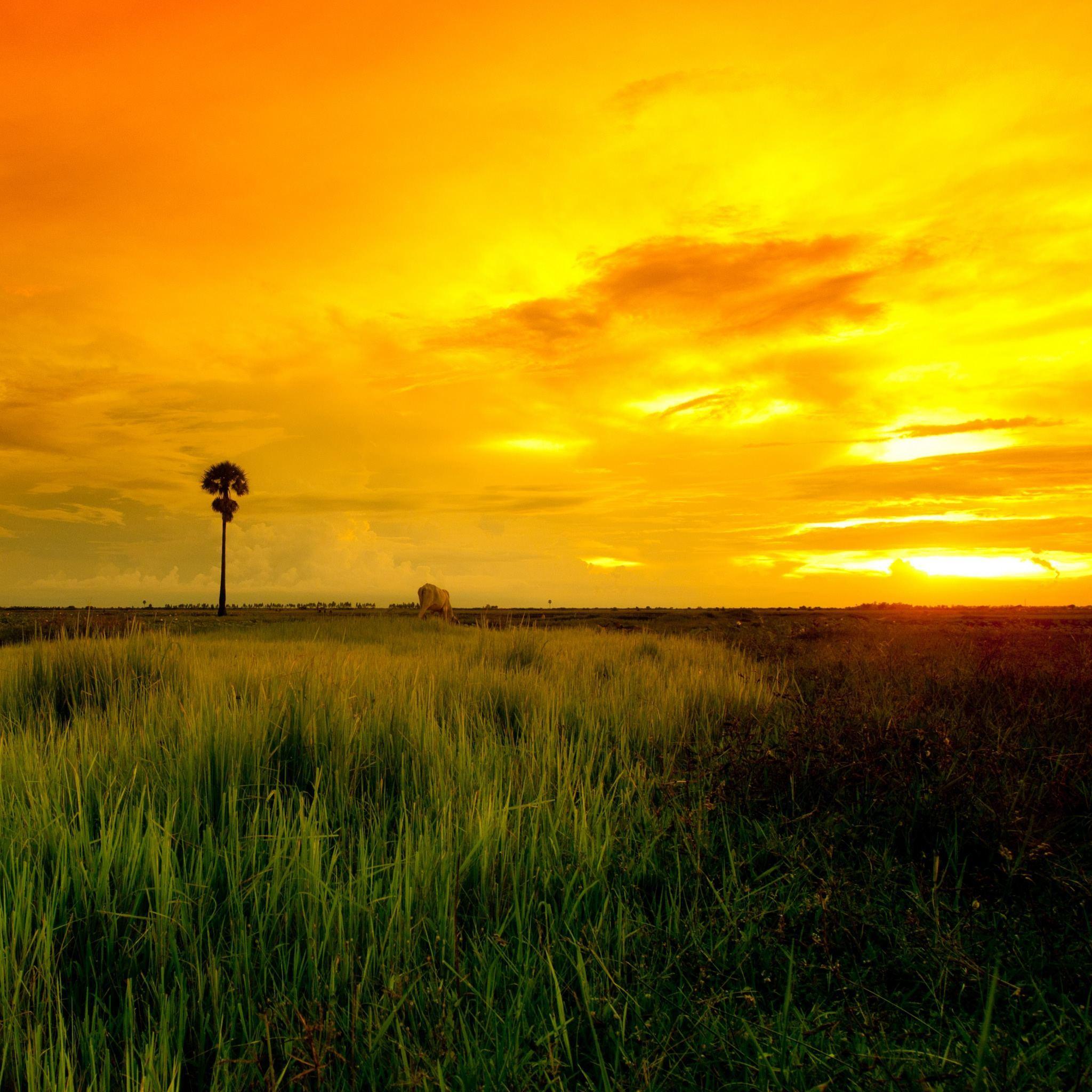 Beautiful Yellow Sunset iPad Wallpaper HD