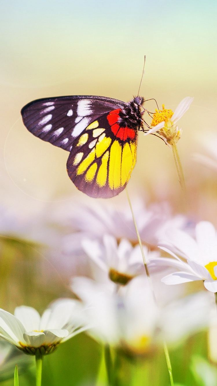 Colorful Butterfly On Flower Closeup iPhone 6 Wallpaper