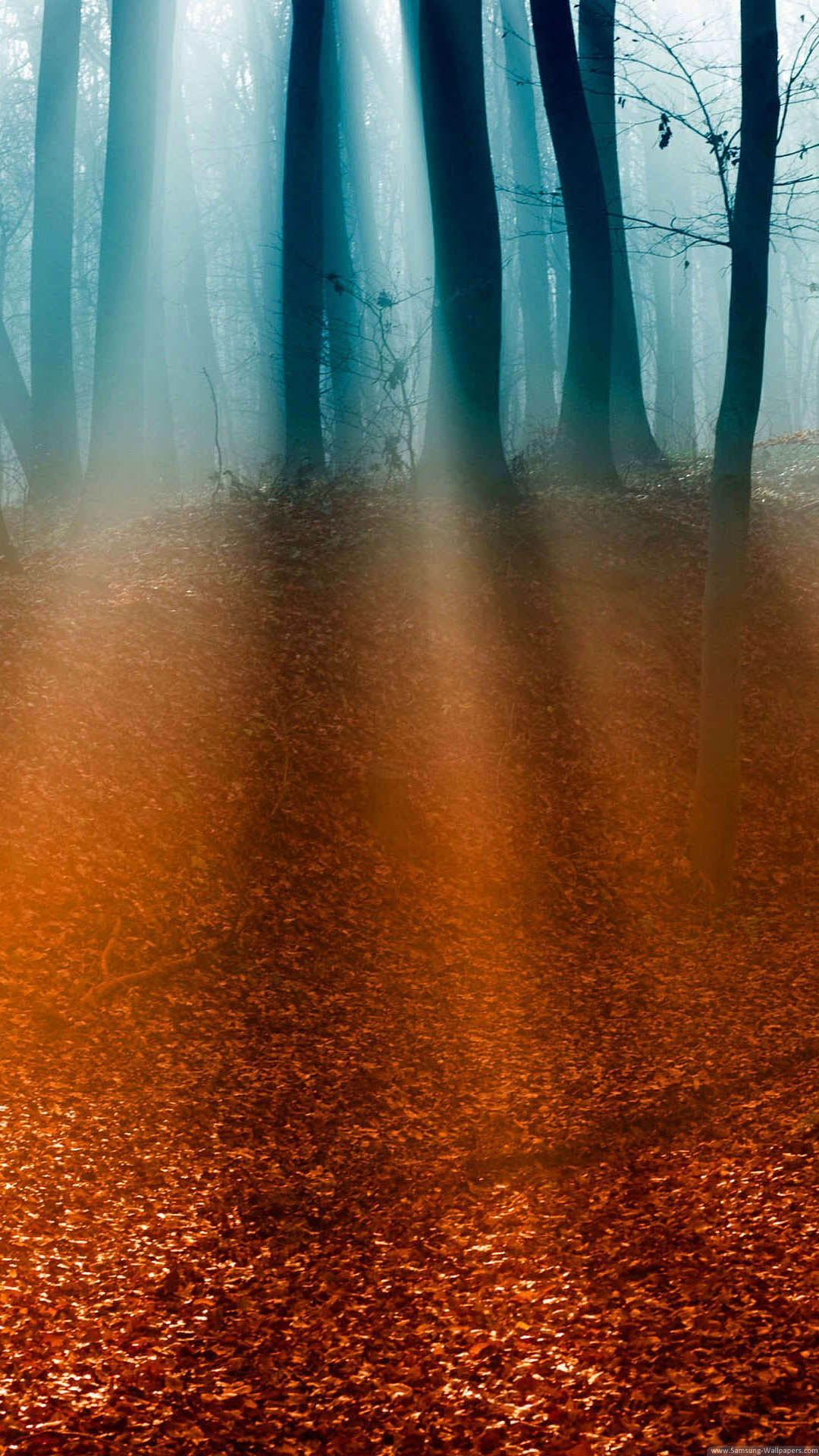 Light Rays Forest Floor iPhone 6 Plus HD Wallpaper