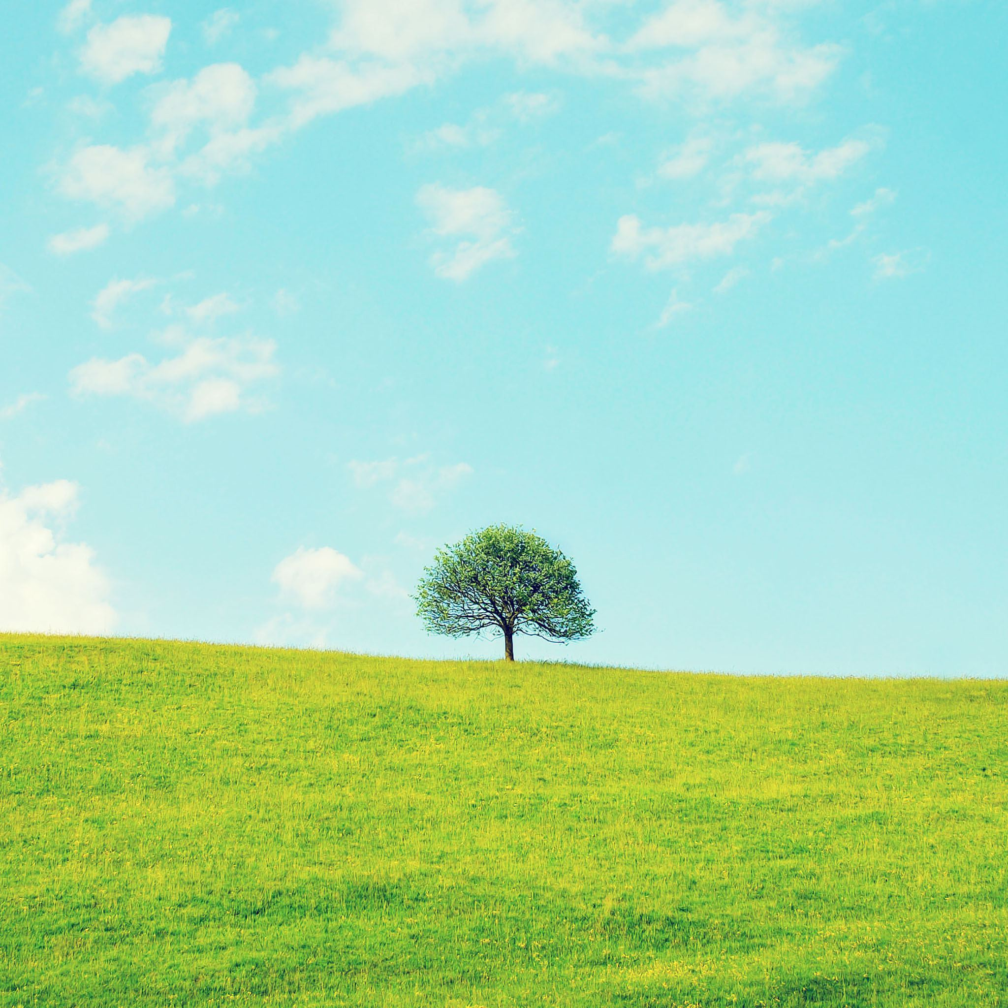 Lonely Tree On The Hill iPad Wallpaper HD (1)